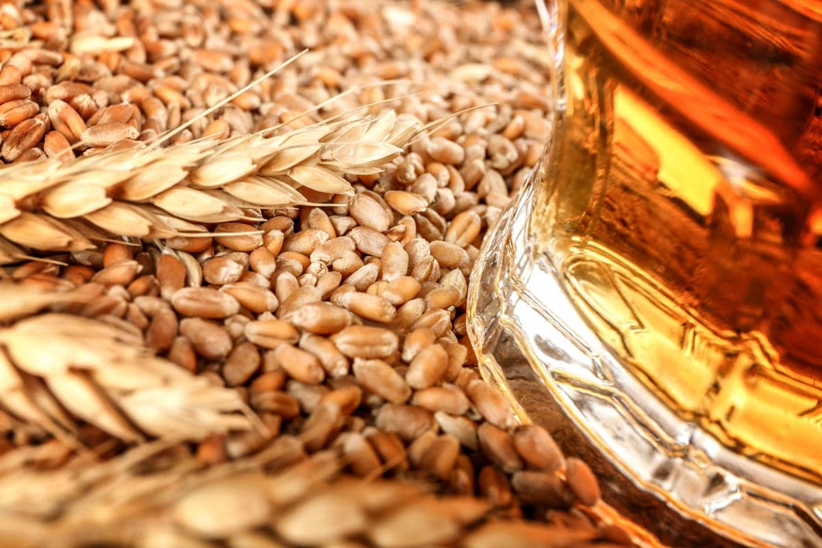 Barley seeds and glass of beer