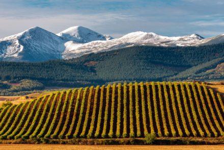 Vineyards with San Lorenzo mountain near La Rioja in Spain
